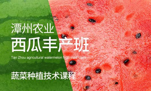 潭州农业西瓜丰产班