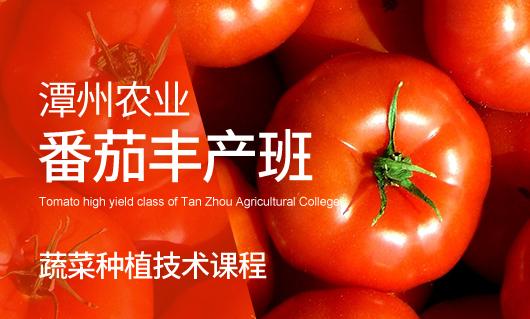 潭州农业番茄丰产班