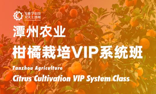 柑橘栽培VIP系统班
