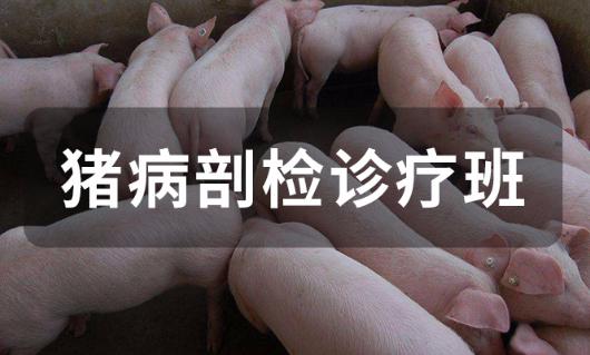 猪病剖检诊疗班