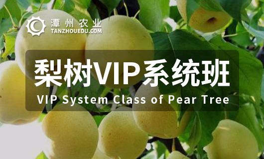 梨树VIP系统班
