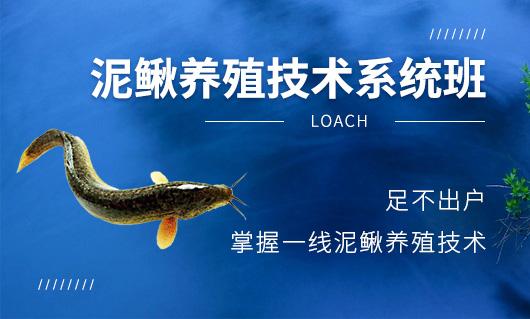 泥鳅养殖技术系统班