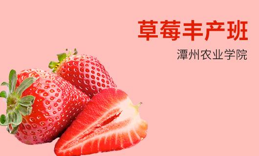 潭州农业草莓丰产班