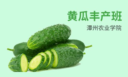 潭州黄瓜丰产班