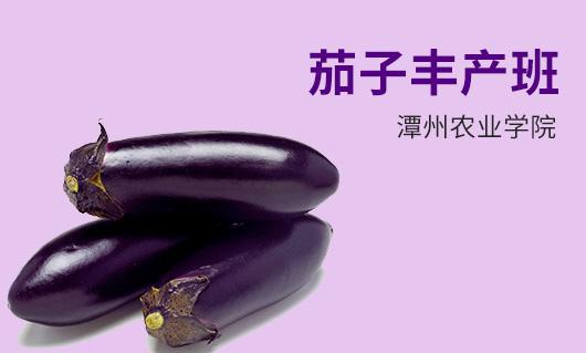 潭州农业茄子丰产班