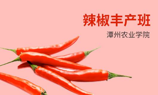 潭州农业辣椒丰产班