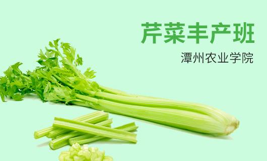 潭州农业芹菜丰产班