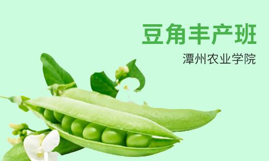 潭州农业豆角丰产班