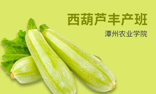 潭州农业西葫芦丰产班