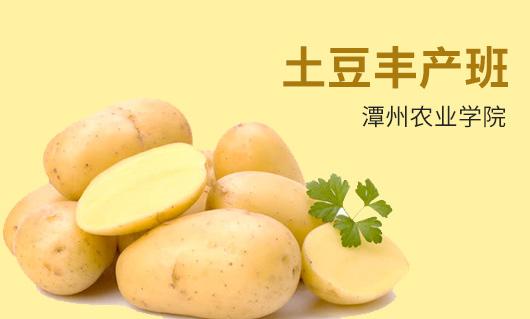 潭州农业土豆丰产班