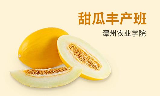 潭州农业甜瓜丰产班