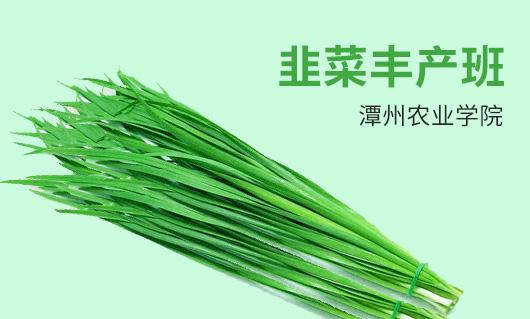 潭州农业韭菜丰产班