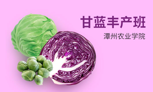 潭州农业甘蓝丰产班