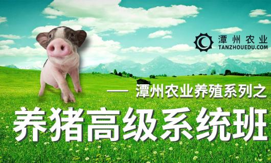 养猪高级系统班