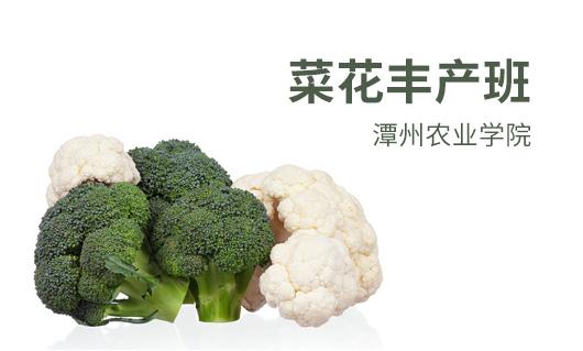 潭州农业菜花丰产班