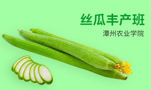 潭州农业丝瓜丰产班