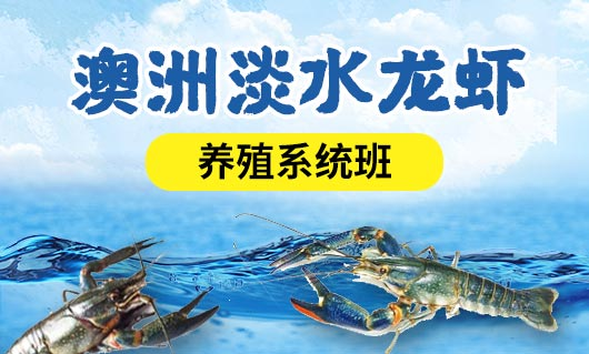 澳洲淡水龙虾养殖技术系统班